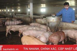 Trang trại lợn trước 'bão dịch': Nội bất xuất, ngoại bất nhập!