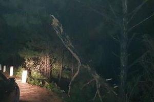 Lâm Đồng: Ôtô bán tải lao xuống hồ Suối Vàng, một người tử vong