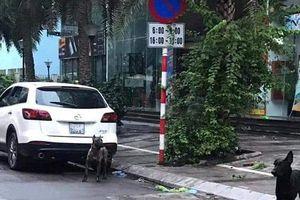 Thả rông 3 con chó không rọ mõm gây náo loạn phố, chủ chó bị phạt 700.000 đồng