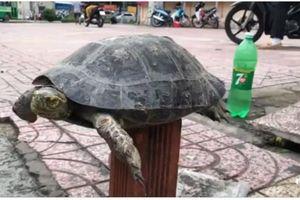 Công khai bán Rùa ngay giữa trung tâm TP.HCM