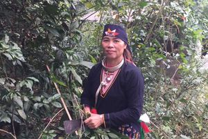 Biết đến lương y Triệu Thị Hòa – cơ hội chấm dứt bệnh đau nhức xương khớp