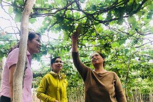 Đưa nguồn vốn 'mát lành' tới vùng đất của nắng gió Ninh Thuận
