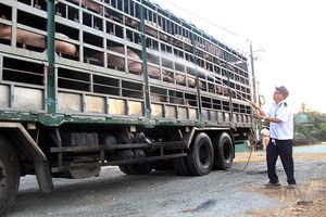 Đông Nam bộ quyết tâm dập dịch tả lợn châu Phi