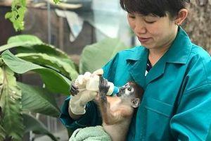 Chuyện về vườn thú 155 tuổi: Trung tâm cứu hộ và chăm sóc thú