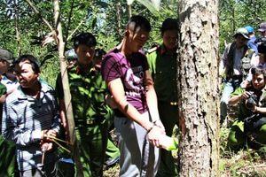 Thực nghiệm hiện trường để điều tra vụ hơn 10 ha rừng thông bị 'đầu độc'