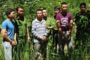 Thực nghiệm hiện trường vụ 'đầu độc' hơn 10ha rừng thông ở Lâm Đồng