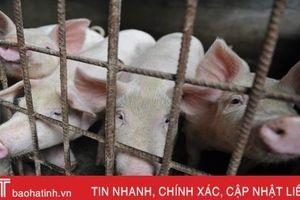 Dịch tả lợn châu Phi lan đến 'quốc gia bí ẩn nhất thế giới'