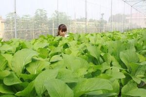 Bắc Giang ưu tiên nguồn lực hỗ trợ các xã được giao đạt chuẩn nông thôn mới