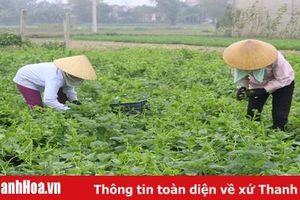 Huyện Vĩnh Lộc: Hình thành 5 vùng sản xuất nông nghiệp tập trung