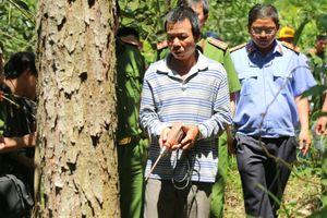 Lâm Đồng: Thực nghiệm hiện trường vụ hủy hoại trên 10 ha rừng thông