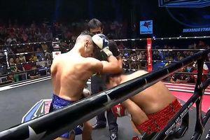 Võ sĩ Muay Thái tung đòn chỏ tàn khốc, đối thủ sấp mặt