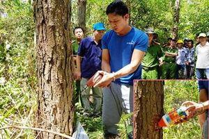 Choáng với chiêu đầu độc 10ha rừng thông ở Lâm Đồng