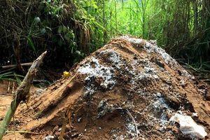 Cần Thơ: Người dân lo lắng khi lực lượng chức năng đào hố chôn lợn chết ở gần khu vực dân cư
