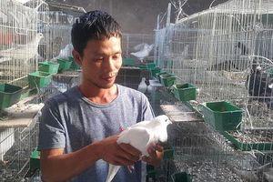 Ninh Bình: Bỏ vô lăng về quê làm giàu nhờ nuôi chim ưa sạch sẽ