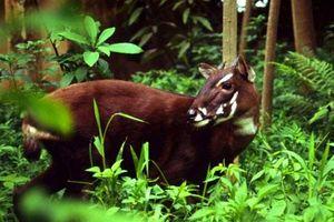 Săn bắn, giết động vật rừng bị phạt đến 400 triệu đồng