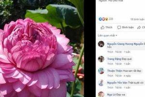 Hoa sen bí ẩn có tới 1000 cánh, dân chơi phát sốt lùng mua khắp Việt Nam