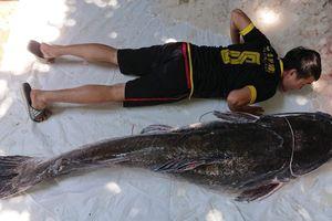 Bắt được cá lăng nặng 77 kg, hơn 50 tuổi trên sông Sê-rê-pốk