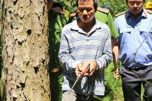 Tội ác bức hại rừng