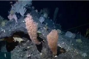 Phát hiện động, thực vật biển quý hiếm ở vực sâu nhất đại dương