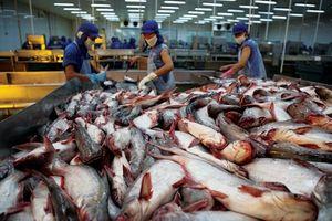 Trung Quốc miễn thuế, xuất khẩu cá tra khởi sắc