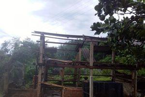 Quảng Ngãi: Lốc xoáy gây thiệt hại lớn ở miền núi
