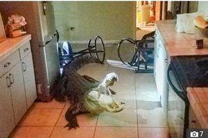 Nửa đêm, phát hiện cá sấu đang lục rượu vang trong nhà bếp