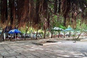 Sau phản ánh của báo Người Đưa Tin: Dừng hoạt động hàng loạt quán cà phê trong TTVH tỉnh Ninh Thuận