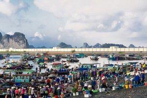 Mãn nhãn với vựa thủy sản bậc nhất ở Quảng Ninh