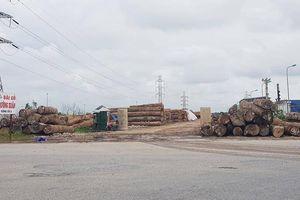 Ai dung túng bãi gỗ khổng lồ vi phạm ở KCN Minh Phương, Hải Phòng?