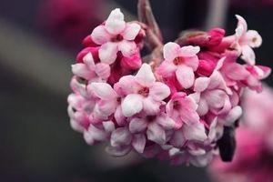 Tử vi thứ Ba ngày 4/6/2019 của 12 cung hoàng đạo: Chuyện tình cảm của Nhân Mã không được như ý