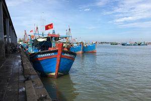 Cảng cá lớn nhất Bà Rịa-Vũng Tàu hoạt động hiệu quả