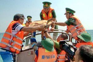 Giải cứu một cá thể rùa biển về lại môi trường tự nhiên