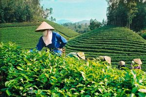 40 doanh nghiệp Việt Nam xúc tiến xuất khẩu sang Trung Quốc
