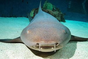 Liều lĩnh cho cá mập ăn, người phụ nữ bị lôi xuống biển, suýt mất ngón tay