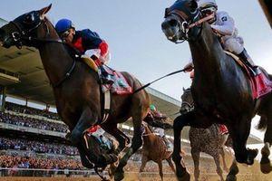 Doanh nghiệp xin mở trường đua ngựa, Đà Nẵng được đề nghị lập quy hoạch mới