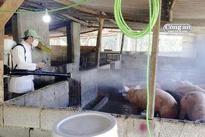 Đà Nẵng: Tập trung mọi nguồn lực phòng, chống dịch tả lợn Châu Phi