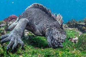 Chiêm ngưỡng 'quái vật' Gozilla của biển cả