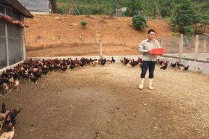 Vĩnh Phúc: Thạc sỹ bỏ giảng đường về quê nuôi gà VietGAP, kiếm 80 triệu/tháng