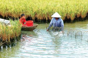 Kiên Giang: Phát triển bền vững thích ứng với biến đổi khí hậu