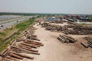 Hải Phòng: Doanh nghiệp chiếm dụng đường nội bộ trong KCN làm bãi tập kết gỗ