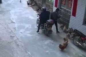 Ăn trộm gà hàng xóm lấy tiền đổ xăng cho xe sang ở Trung Quốc
