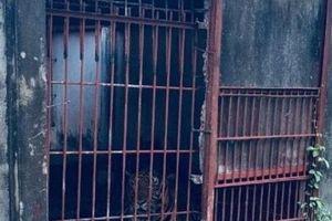 Vụ hổ cắn đứt tay người: Nhân viên cũ đi vào chuồng hổ sau khi uống rượu