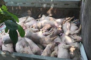 Phú Thọ lập 78 chốt kiểm dịch quyết chặn dịch tả lợn châu Phi