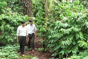 Đồng Nai: Mạnh dạn nuôi, trồng cây, con mới từ vốn vay Quỹ Hỗ trợ nông dân