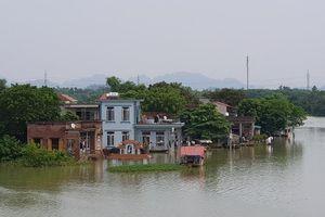 Ninh Bình: Nhiều tuyến đê xung yếu bị hư hỏng trước mùa mưa bão