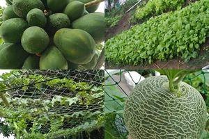 'Trang trại' vui vẻ với đủ rau quả và gà sạch của người phụ nữ đảm đang ở TP. HCM