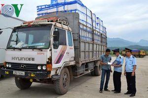 Hơn 11.000 tấn vải lai xuất sang Trung Quốc qua cửa khẩu Lào Cai