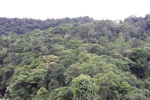 Để phá rừng tràn lan, một trưởng trạm bảo vệ rừng ở Bình Thuận bị bắt