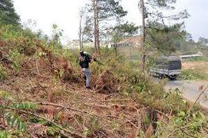 Vụ người dân phá rừng nuôi tôm: Huyện chậm chỉ đạo kiểm tra, rà soát
