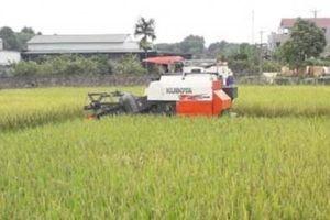 Vùng quê nghèo thay đổi diện mạo nhờ nông thôn mới